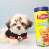 Hamilton - Teacup Shih Tzu Puppy Has Found A Loving Home With Joshua in Castaic, CA!-12051