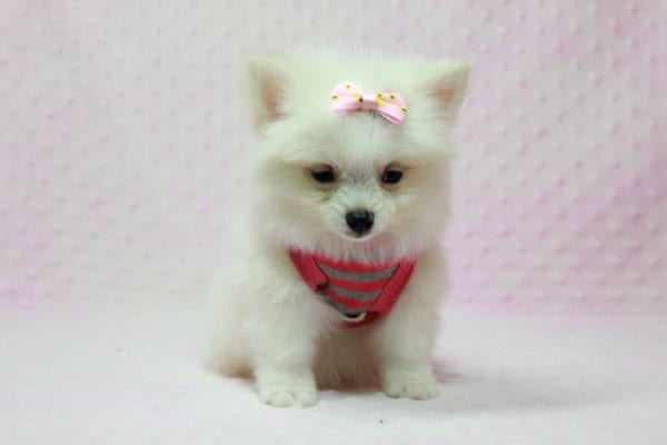Kylie Jenner - Teacup Pomeranian Puppy in L.A Found A New Loving Home -12869
