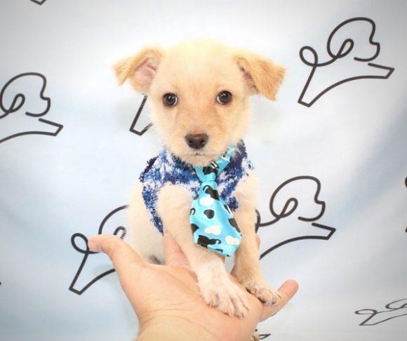 Besty - Malchi Puppy.1