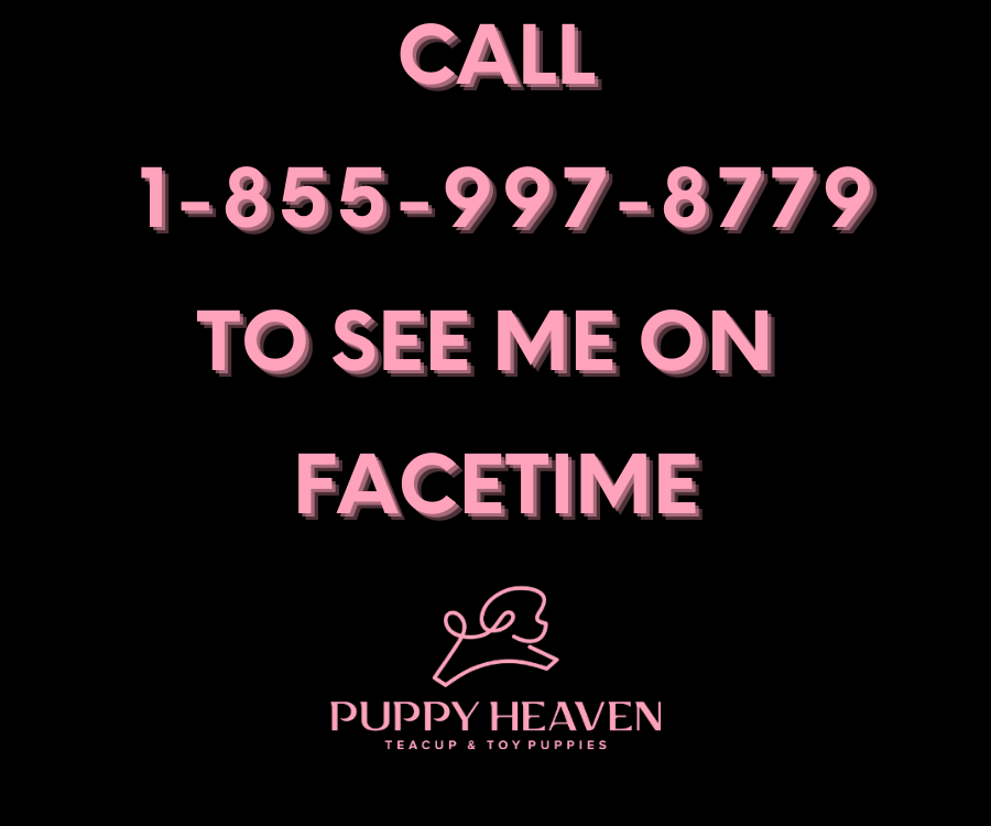 Call 1-855-997-8779 to see me on facetime