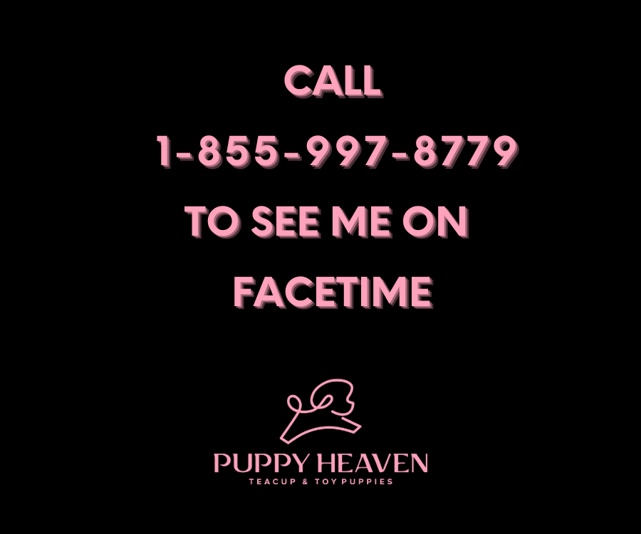 Call facetime