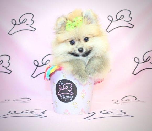 Chrissy Teigen - pomeranian puppy in Las Vegas.6