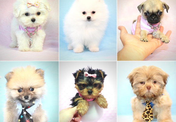 Puppy Heaven - Join Our Waiting List