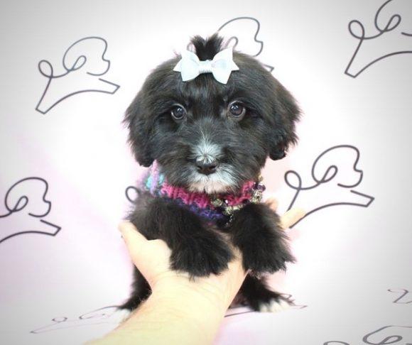 Lana Del Rey - Malshi Puppy.1