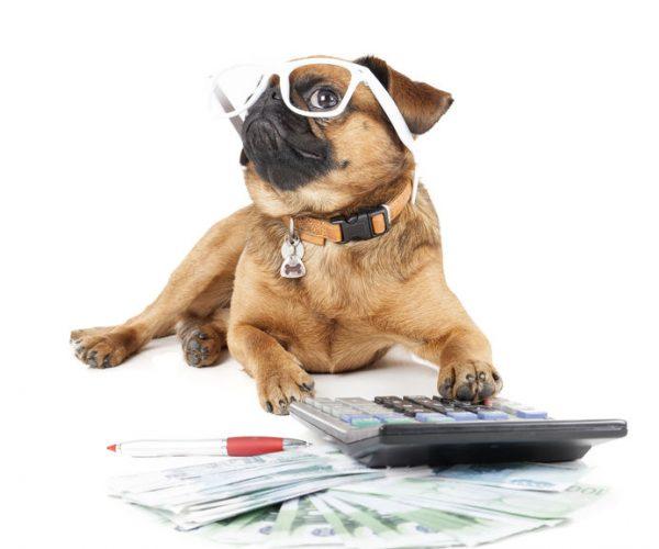 Dog Breed Small Brabant Accountant