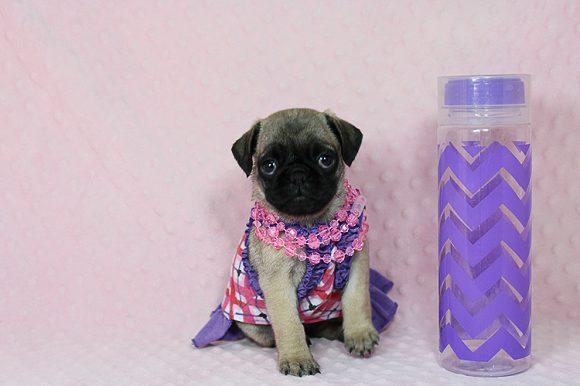 Sailor Moon - Toy Pug Puppy